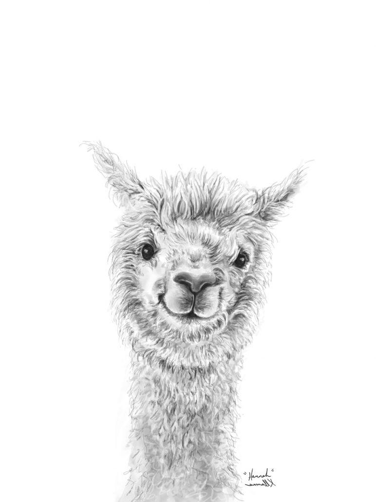 Llamas Art Show K Llamas Fine Art